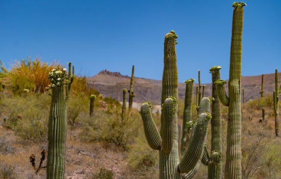 2.5 Acres in Gold Canyon, AZ!